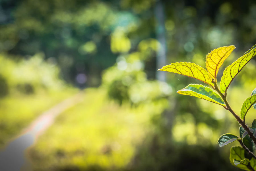 Blackground Green Leaves🌿 Nature Beauty In Nature Close-up Day Focus On Foreground Freshness Green Color Growth Leaf Nature No People Outdoors Plant Yellow