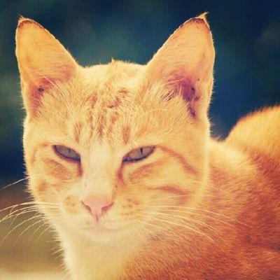 Samarinda InstaAsia INDONESIA Instagram instamarinda samarinda animal pets cat kitten kucing