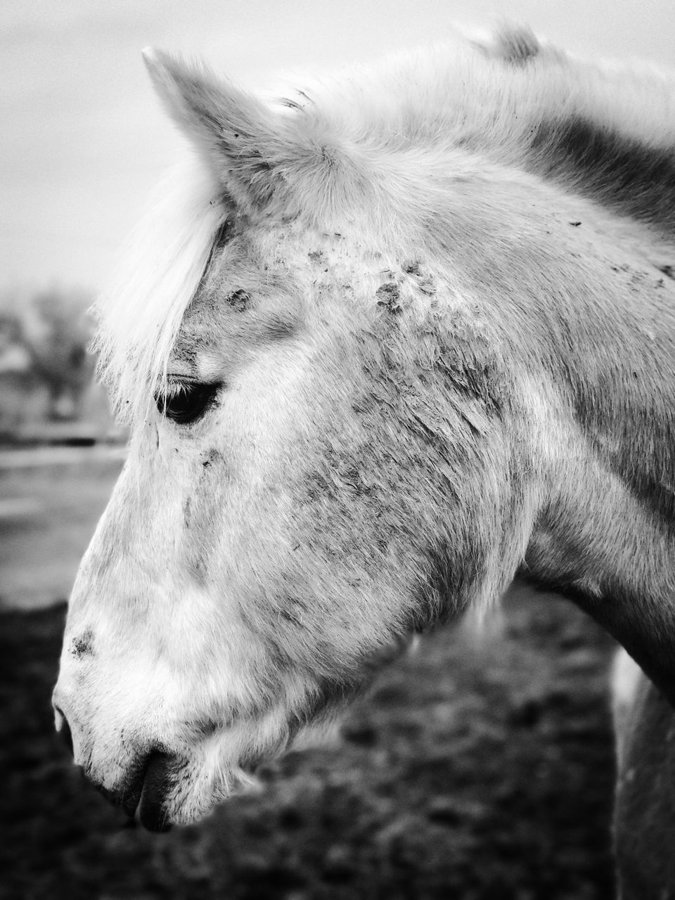 domestic animals, animal themes, horse, one animal, mammal, livestock, animal head, focus on foreground, day, outdoors, field, no people, close-up, nature