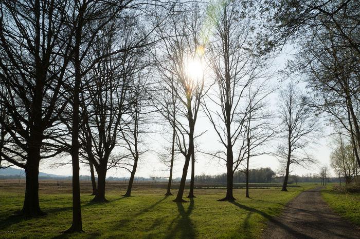 Gegenlicht Hille EyeEm Best Shots Wald Forest Tree Garten Sonnenstrahlen Lichter Blauer Himmel Schatten Sky Baum Sonne WoodLand Woods
