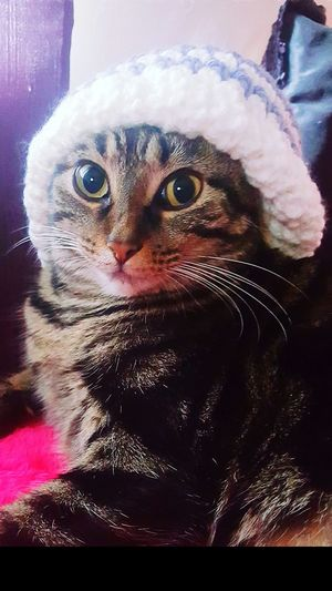 Cat Kitty Silly Cat  Cat In A Hat Cat In The Hat Winter Funny Funny Cat Hat Snow Silly Face Kitten Funny Kitty Cats Being Cats Animal Themes Pets In Snow Cold Cold Weather