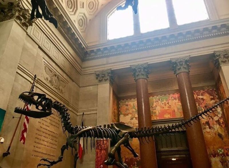 Runaway Dinosaur Architecture Built Structure Indoors  Hanging Low Angle View Building Exterior Day No People Dinosaur Paleontology Fossil Museum Travel Destinations Travel Photography Travel Newyorkcity American Museum Of Natural History