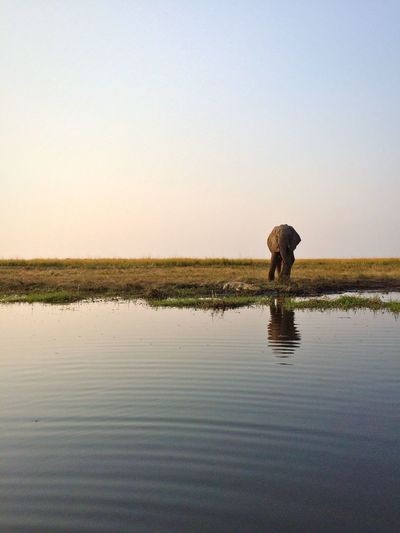 Scenic View Of Elephant Against Clear Sky
