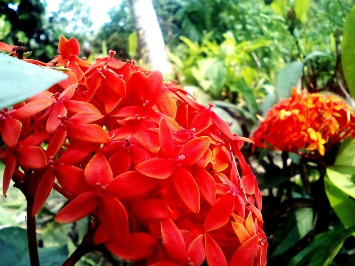 flowers🌸 Myvillage Photography Myhobby Flower Growth Red Nature Beauty In Nature Fragility Plant Day Freshness