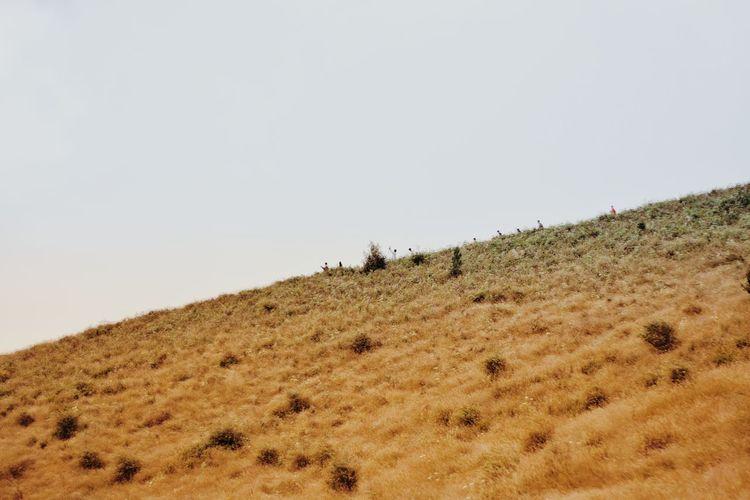 Bird Flamingo Colony Sand Dune Sky Animal Themes Landscape Baboon Safari Animals