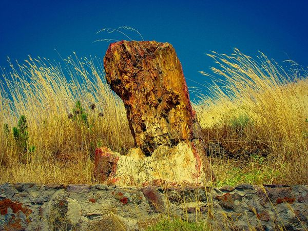 Petrified Tree Trunk amidst the Weeds blown by the Wind against the Sky. Petrified Forest National Park Petrified Tree Petrified Wood Petrified Tree Trunk Lesvos Island Greek Islands Shades Of Yellow The Great Outdoors - 2016 EyeEm Awards Seeing The Sights Monument Nature's Diversities Color Palette