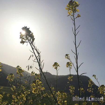 Spîdêbâš Kurdistan Kurd Kêskatî Gul Green Spring Sun Sky IPhon6 IPhone Ilovekurdistan Ilovekurdish صباح الخير الاخضر الورود كوردستان