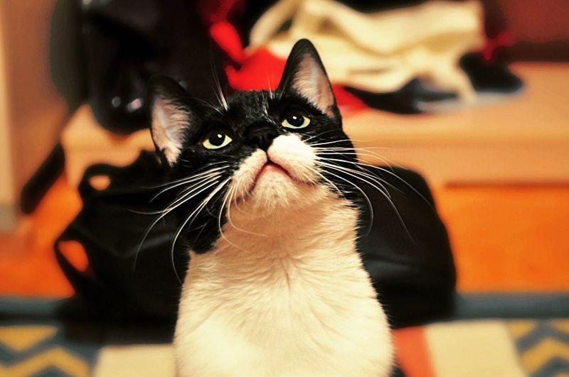 Savaşmayı da çok severdi, ben değil kedi özledi Cats Of EyeEm Cats 🐱 Catstar #cat #catnap #catoftheday #catpic #catlovers #catsconnect #catinstagram #catsofinstagram #gato #gatinhos #gatto #garfield #petstagram #premierpet #photooftheday #petsofinstagram #picoftheday #petlovers #instabicho #ilovecats #ilovemypet #issovici First Eyeem Photo
