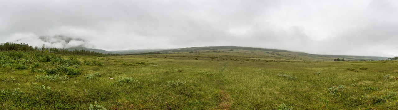 Near Oldervik. Beauty In Nature Cold Cold Temperature Cross Country Endless Fog Foggy Grass Hiking Nature No Way Northern Norway Norway Offroad Outdoors Panoramic Rain Rainy Days The Way Forward Tree Weather