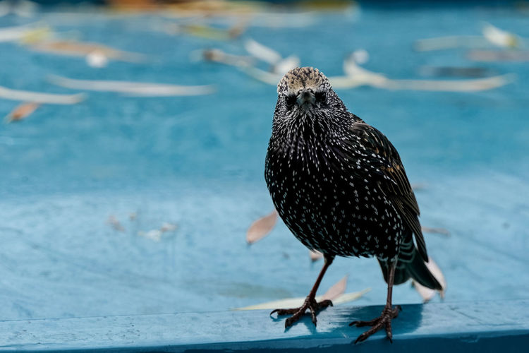 Close-up of bird perching on a barge