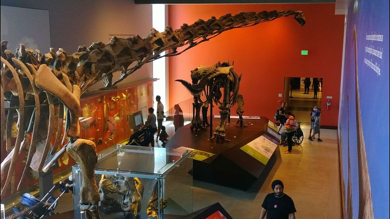 Museum Fossil Extinct Learning People Display Exhibition Bones