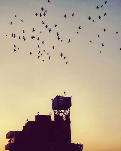 Bird Flock Of Birds Flying Outdoors Sky Beauty In Nature Motion Sunset EyeEmNewHere Lost In The Landscape Be. Ready. EyeEm Ready   Shades Of Winter Business Stories An Eye For Travel The Graphic City Mobility In Mega Cities Adventures In The City