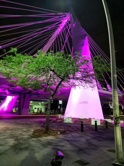 Purple Architecture Illuminated Pink Color Built Structure Night Plant Decoration Multi Colored Tree City No People Outdoors Light
