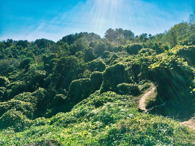 Nature Beauty In Nature Tree Growth Sky Green Color Lush Foliage Low Angle View Sunlight Tranquil Scene Scenics No People Outdoors Day Landscape Sunbeam Tranquility IPhoneography Enjoying Life Hiking Korea Daylight Light And Shadow Landscape_Collection
