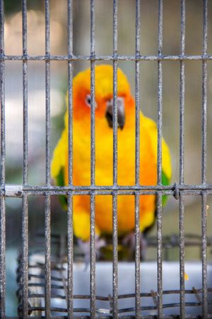 Behind bars Animal Themes Cage Bird Animals In Captivity Animal Wildlife Nature Close-up Animals In The Wild Parrot No People Trapped Indoors  Beauty In Nature Budgerigar Day Perching Break The Mold