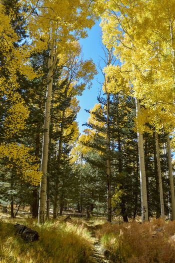 Low angle view of trees in forest during autumn
