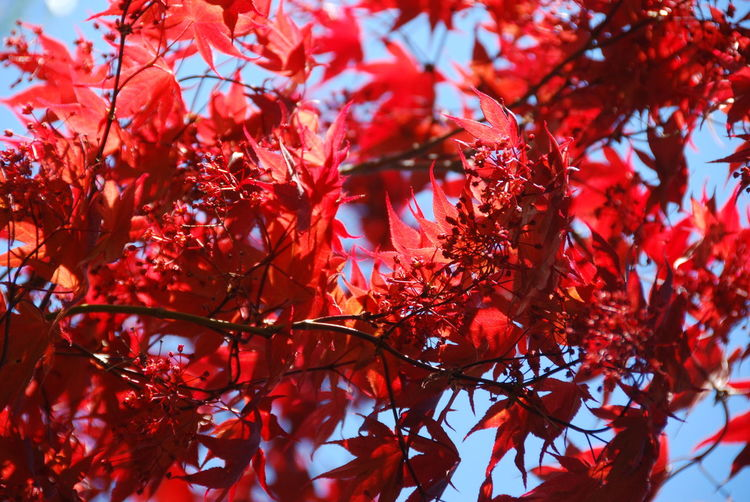 Tree Red Plant