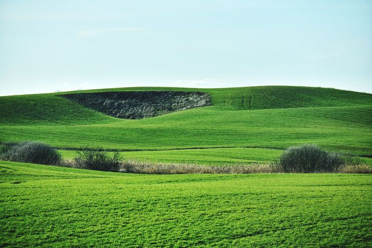 spring green fields in poland Fields Green Spring Tea Crop Rural Scene Agriculture Field Rice Paddy Grass Sky Green Color Landscape Cultivated Land Plantation Farm Plowed Field Cultivated Cereal Plant Farmland Crop  Ear Of Wheat Terraced Field Wheat