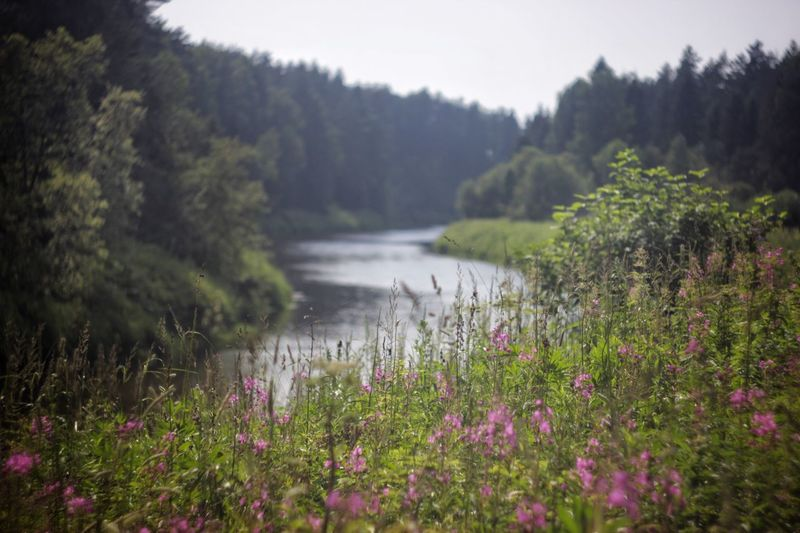 Summer river in Forrest Nature Growth Beauty In Nature Tranquil Scene Flower Tranquility No People Scenics Plant Water Day Outdoors Landscape Tree Grass Sky Freshness River Bank  Done That. Been There. Freshness Forest Green Color Grass Tranquility Perspectives On Nature Summer Exploratorium