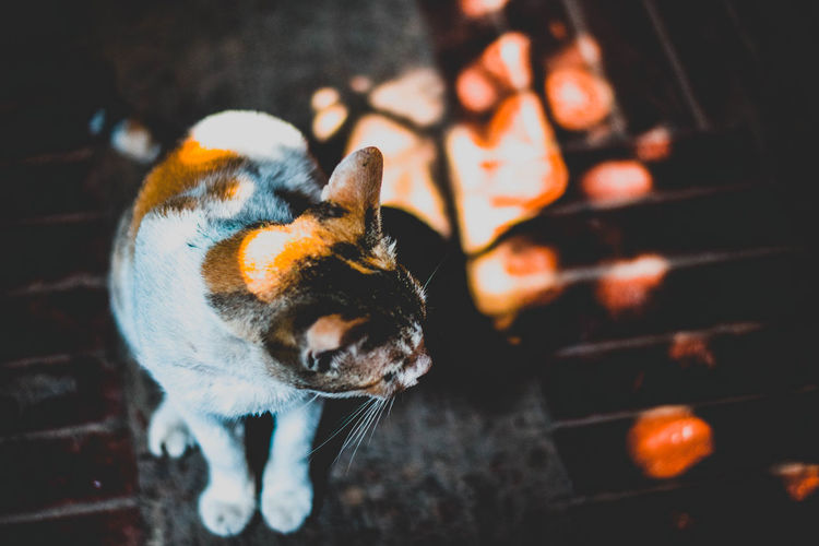 The Stray Cat With An Attitude Animal Lover Animal Themes EyeEm Gallery EyeEmNewHere High Angle View No People One Animal Outdoors Pets Red Hues Sunlight The Street Photographer - 2017 EyeEm Awards The Photojournalist - 2017 EyeEm Awards The Great Outdoors - 2017 EyeEm Awards The Portraitist - 2017 EyeEm Awards Lights Portrait Feline EyeEm Animal Lover Mood Captures Beauty In Ordinary Things Stray Cats EyeEm Diversity Animal Photography Afternoon Live For The Story The Architect - 2017 EyeEm Awards Visual Feast BYOPaper! Out Of The Box Mix Yourself A Good Time The Week On EyeEm Your Ticket To Europe Pet Portraits Lost In The Landscape Connected By Travel Perspectives On Nature Perspectives On Nature
