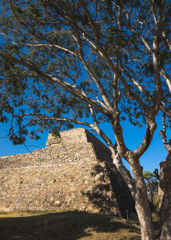 Ancient Ancient Architecture Ancient Civilization Ancient Ruins Archeology Architecture Art Blue Cosmos Culture Day History Landscape_photography Low Angle View Mexico Mexico_maravilloso Monte Alban Nature Nature No People Outdoors Prehispanic Pyramid Sunlight Tree