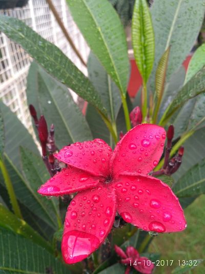 Leaf Nature Red Pink Color Beauty In Nature Close-up Flower Flower Head Freshness Water