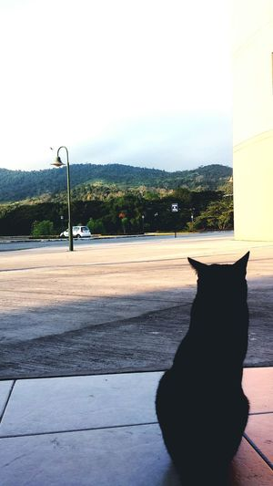 Cat♡ Alone