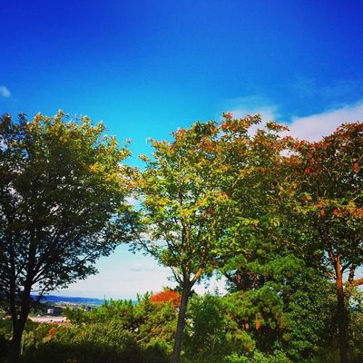 Icu_nature Ic_nature Ic_ireland Ireland Samsungphotography Ireland🍀 Ireland Lovers Treescape Nature Trees And Sky