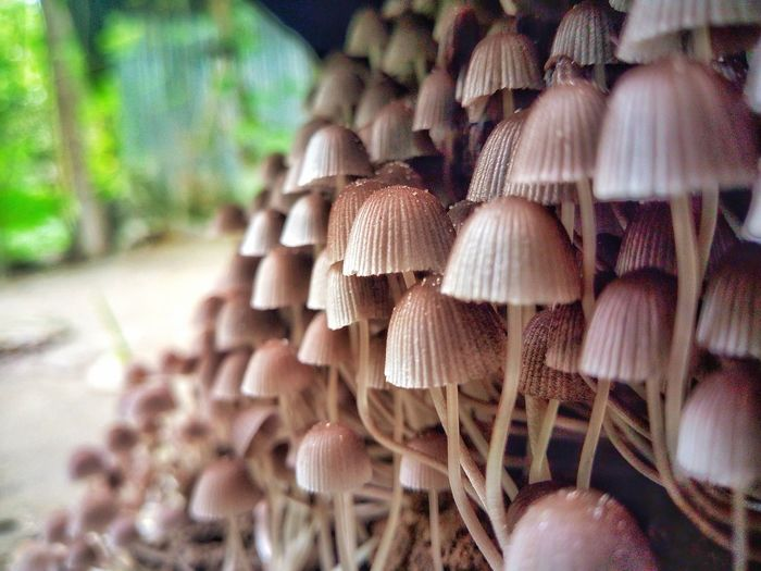 Close-up of mushrooms growing on land