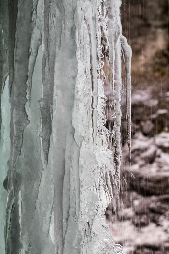 Close-up of icicles on tree trunk