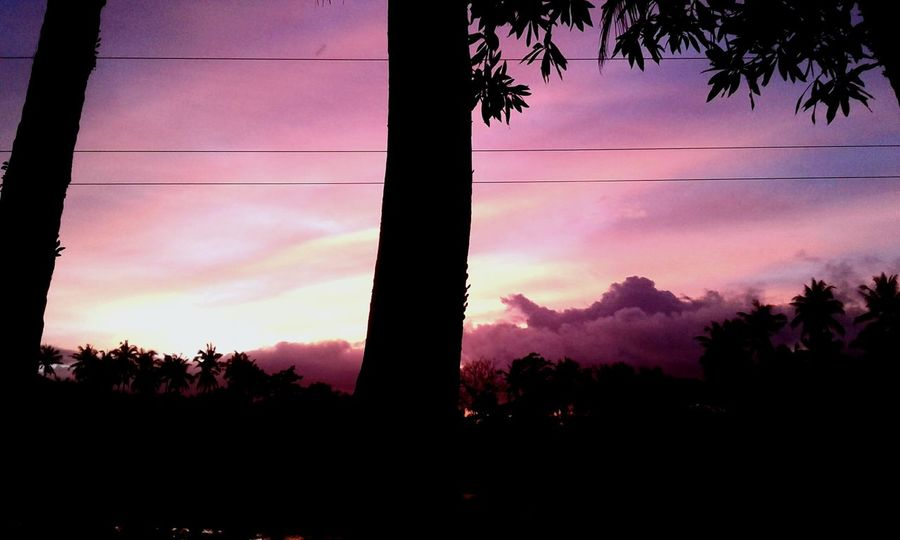 Sunset Pink Sunset Trees Clouds And Sky Nature Nature Photography