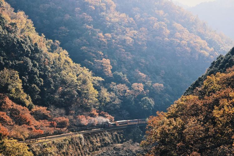 Autumn colors Autumn Leaves Fall Beauty Autumn Autumn Collection Beauty In Nature Change Day Environment Forest Growth High Angle View Landscape Mountain Nature No People Non-urban Scene Outdoors Plant Railway Scenics - Nature Tranquil Scene Tranquility Transportation Tree