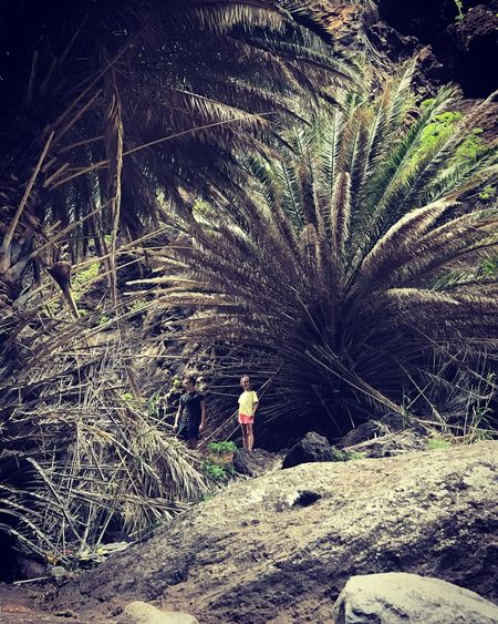 Tree Outdoors Small In A Big World Masca, Tenerife Adventure Nature Lifestyles