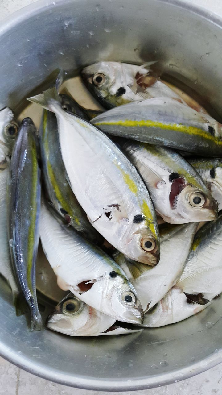 High Angle View Of Fish In Bowl