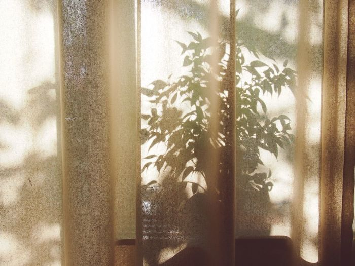 Summer morning. Pity that summer has almost past... Summer Silhouette Sunshine Sunlight Morning Light And Shadow Shadow E-pm1 Bonsai