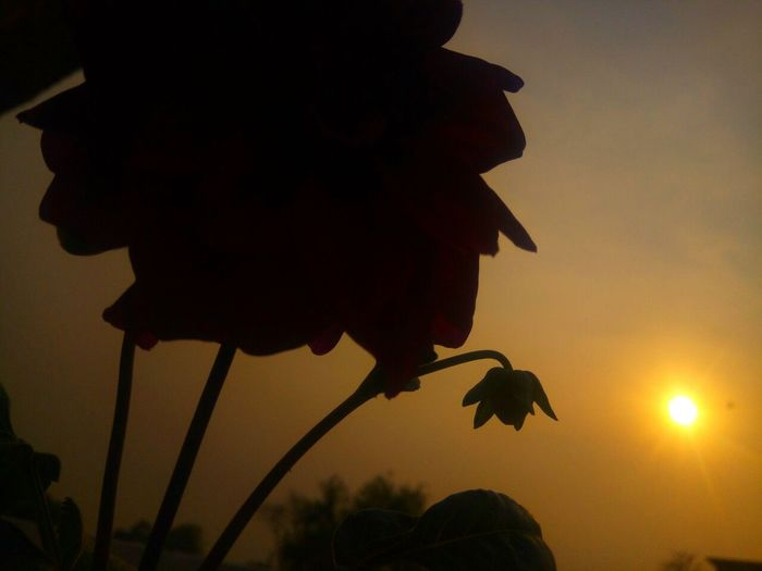 Sunset with flower Sunset Outdoors Sky Flowers Mobile Photography Photography Lovely Love ♥ EyeEmNewHere Millennial Pink
