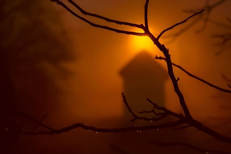 Branch Sunset
