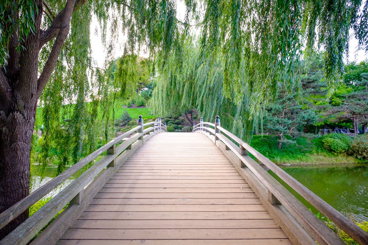 Footbridge over river in forest