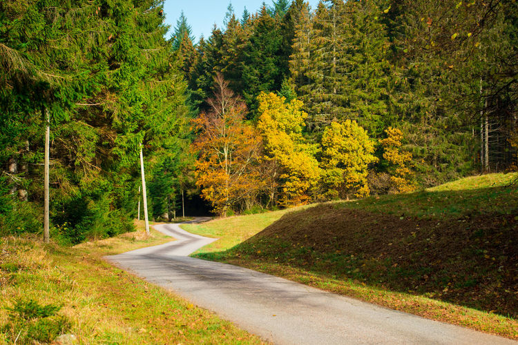 Countryside Landscape Country Country Road Autumn Forest WoodLand Woods Pine Tree Nature Calm Tranquil Scene Tree Plant Road Transportation Green Color No People Day Beauty In Nature Tranquility Land Scenics - Nature Non-urban Scene Direction Outdoors Change Pine Woodland Winding Road Mountain Road