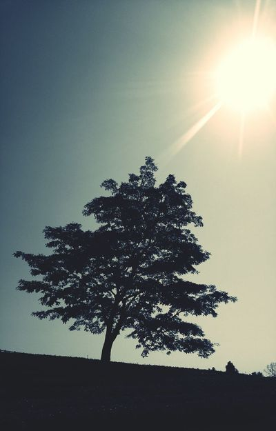 Still here for ... Sunlight And Shadow Sunlight ☀ Flare Rookiephotographer Beauty In Nature Nature Tree No People Loneliness Single Tree Waitingforsomeone