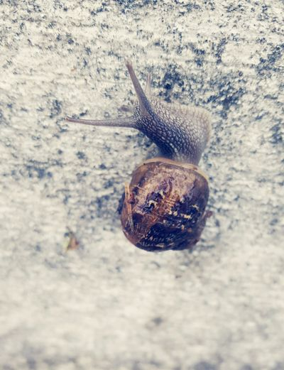 We always see yellow snails. It was a rare find to see this brown snail. KimberlyJTilley