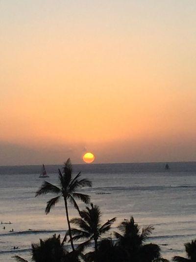 Sunset Orange Color Palm Tree Yellow Color Sun Ocean No People No Edit/no Filter Oahu Hawaii Oahu, Hawaii Island Of Oahu, Hawaii Oahu Pacific Ocean View Oahu Sunset Waikiki Beach Honolulu, Hawaii Hawaii Sunset Hawaii Honolulu  Oahu / Hawaii An Eye For Travel The Great Outdoors - 2018 EyeEm Awards The Great Outdoors - 2018 EyeEm Awards