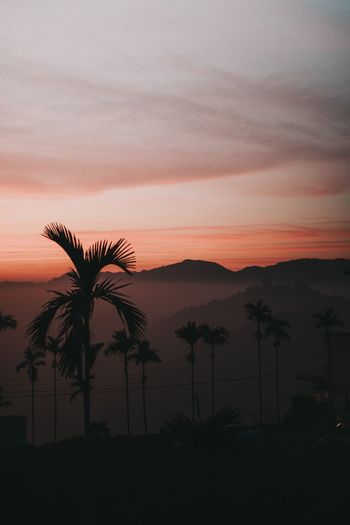 Palm Tree Sunset Beauty In Nature Tree Silhouette Nature Tranquil Scene Sky Scenics Tranquility No People Growth Outdoors Landscape Sea Mountain Day