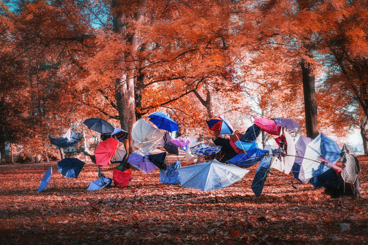 Group of people sitting in park during autumn