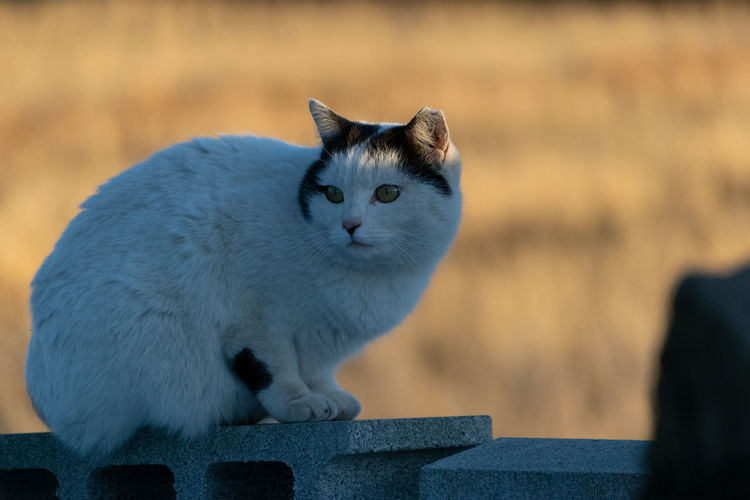 Cute cat Cat