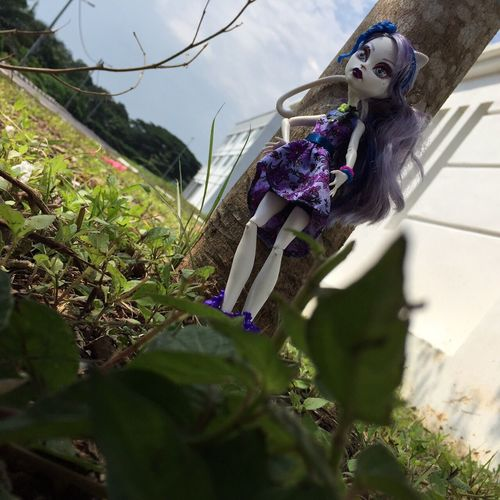Check This Out Dolls Monster High Toysgraphy Dollsgraphy Monsterhighmalaysia Catrinedemew Taking Photos, Dolls
