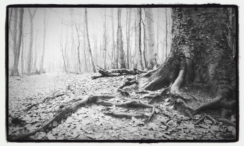 Blackandwhite In The Forest Philosophenwald