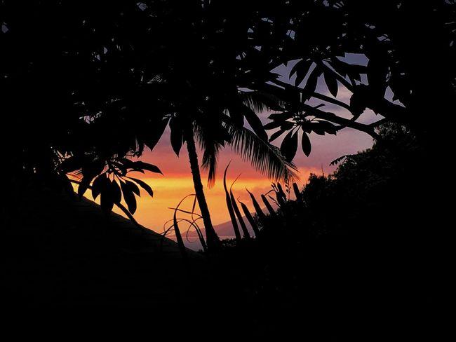 """Sunset Crater"" Sunset Tree Scenics Sky Nature Calm Palm Trees Maui Maui Hawaii First Eyeem Photo Mauiphotography Hawaii Maui Sunset Beauty In Nature Eyeemphoto Orangesky Firesky Wailea Travel Travel Photography Dusk Twilight Light And Shadow Sunset_collection"