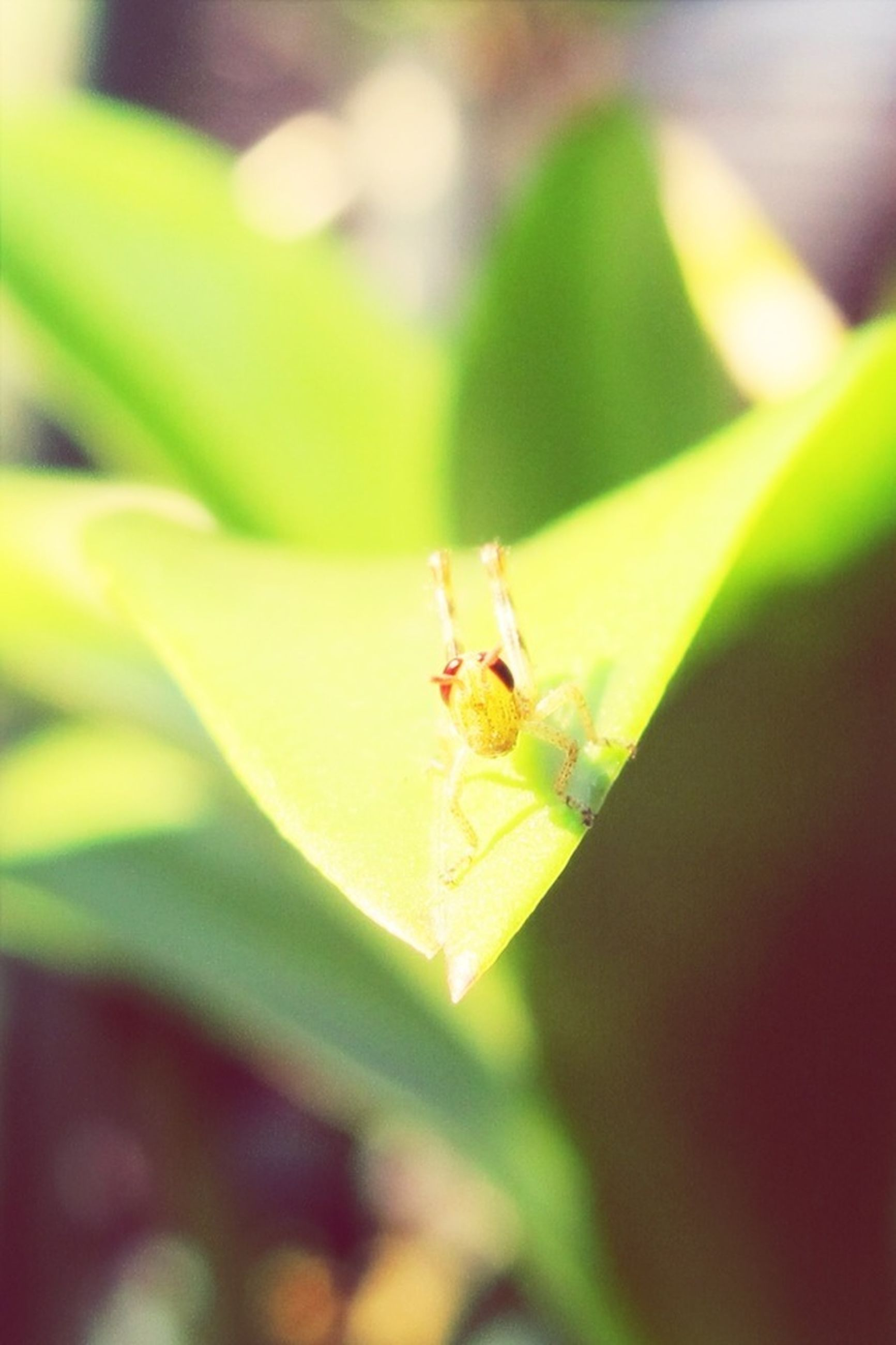 insect, one animal, animals in the wild, animal themes, wildlife, close-up, focus on foreground, selective focus, green color, dragonfly, nature, plant, animal antenna, leaf, yellow, day, grasshopper, outdoors, no people, beauty in nature