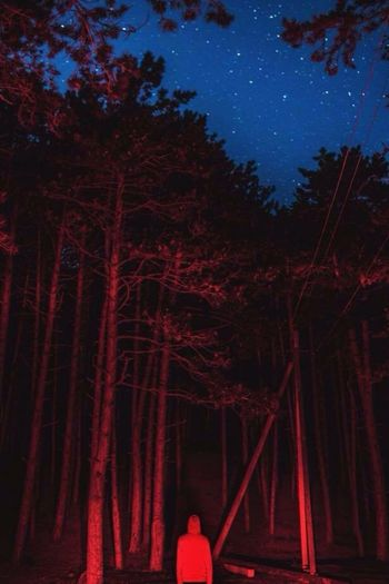 Night Star - Space Tree Astronomy Sky Red Constellation Moon Outdoors Beauty In Nature One Person Branch Galaxy Space Nature People EyeEmNewHere